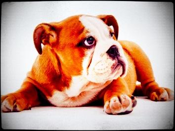 dog-pic5